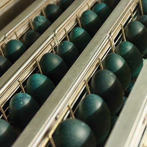 Emu egg storage