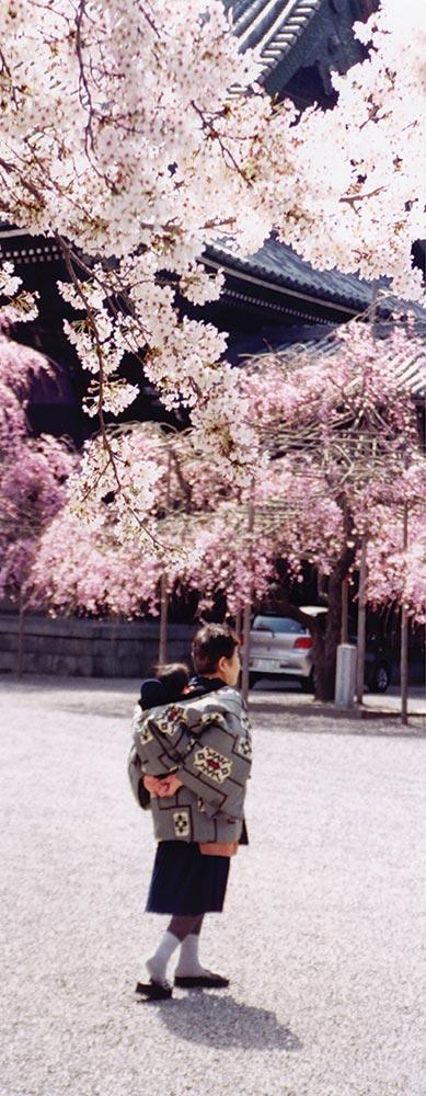 Cherries blossom. A life starts
