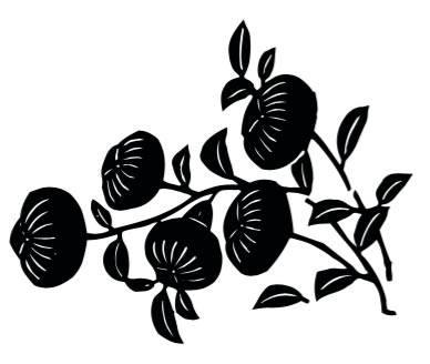 fiorimalesi